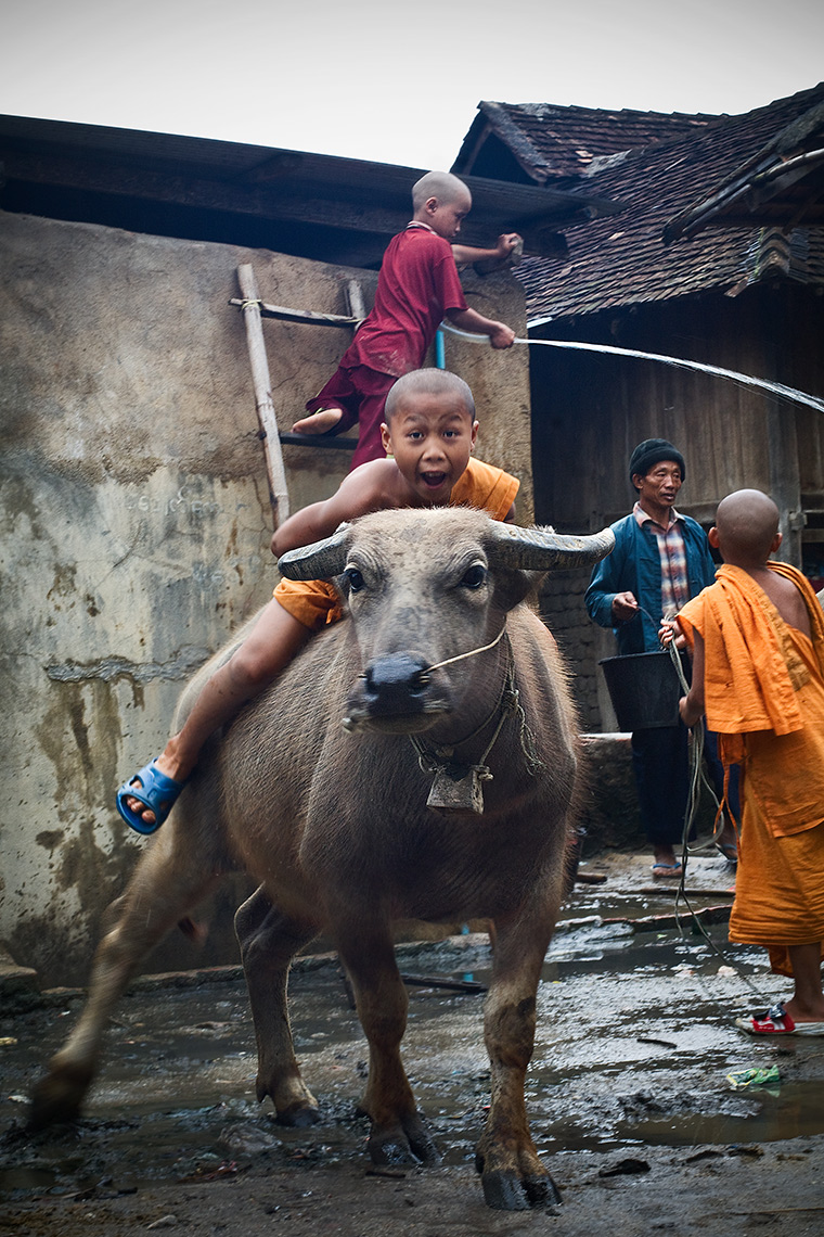 young Buddhist monk on a bull, Padaung Village, Kengtung, Burma (Myanmar). Photo © Konstantinno Hatzisarros 2010