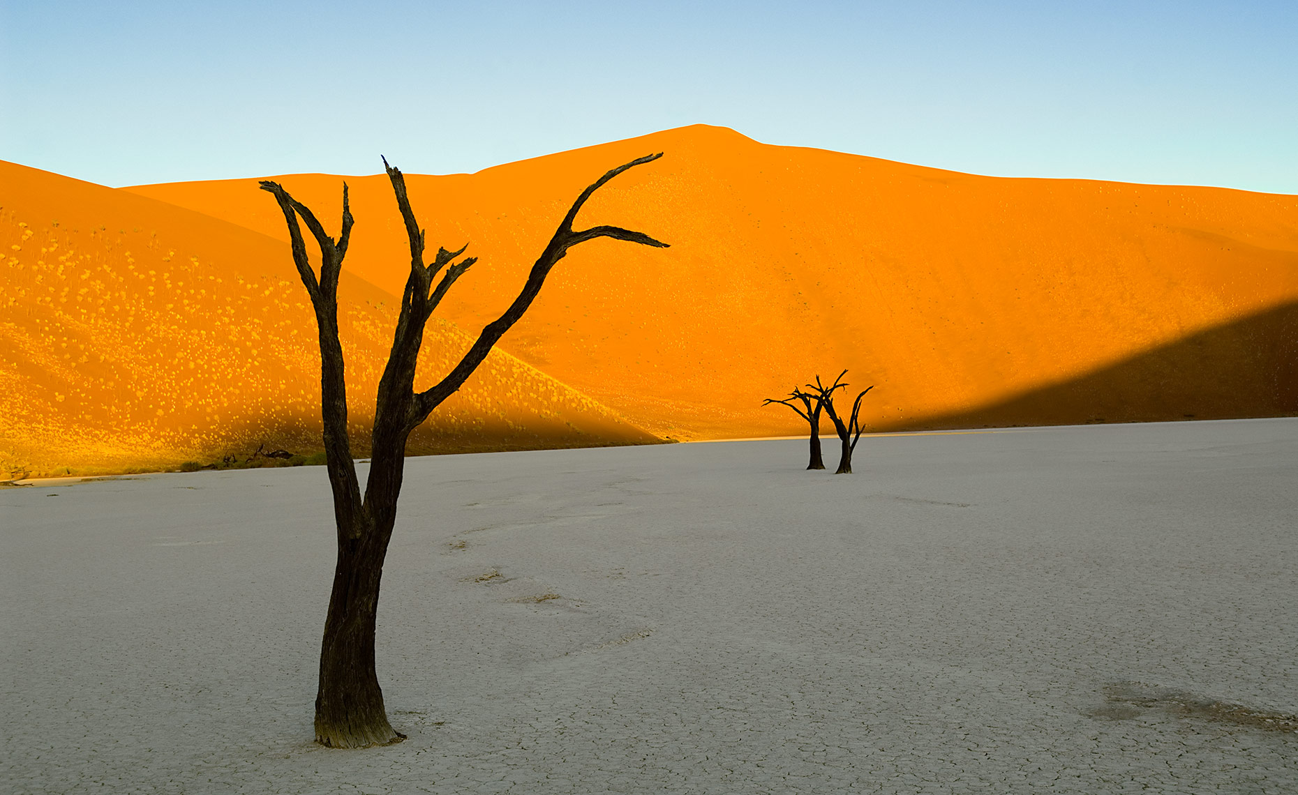 Petrified Trees And Sand Dunes In Dead Vlei, Namibia
