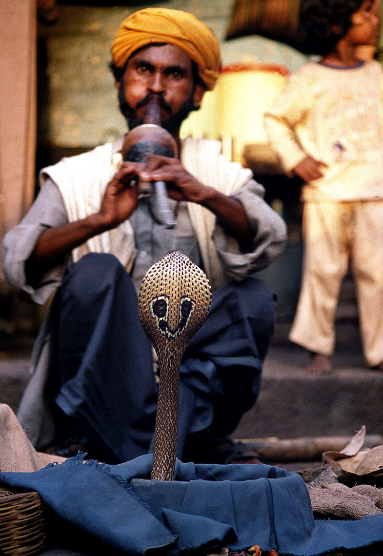 Snake Charmer WIth King Cobra, Calcutta, India
